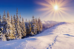 rsz_winter_sun1
